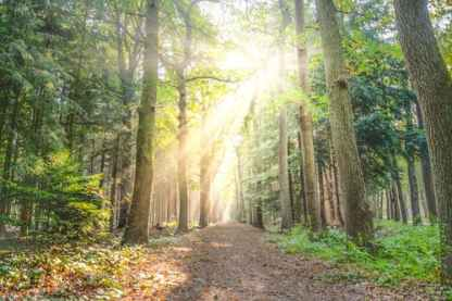 forest-fog-sunny-nature-615348